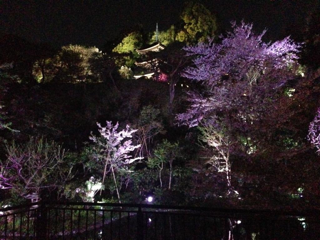 夜はライトアップされる椿山荘