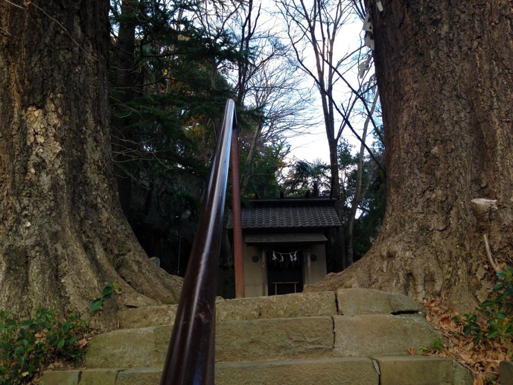 水神社大木の参道