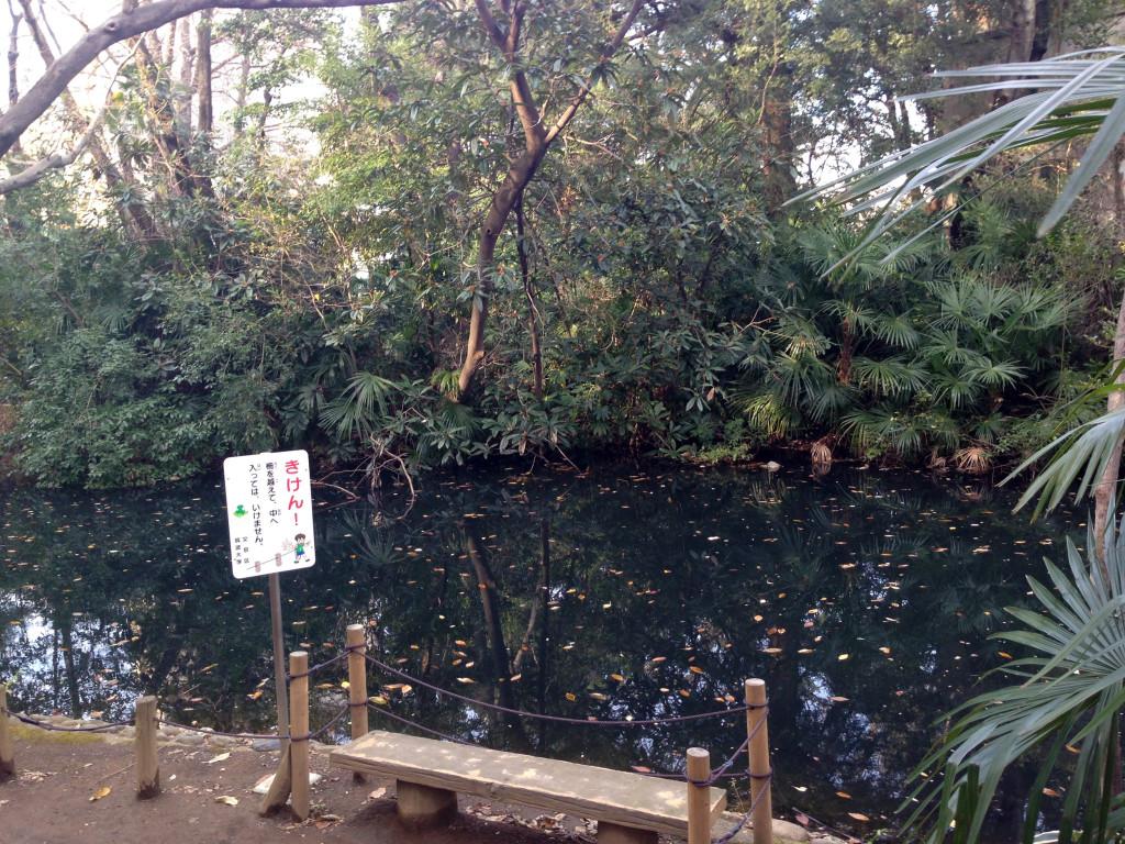 占春園の池2