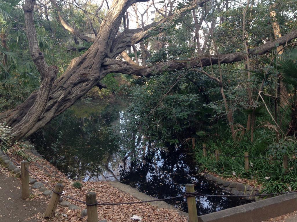占春園の池