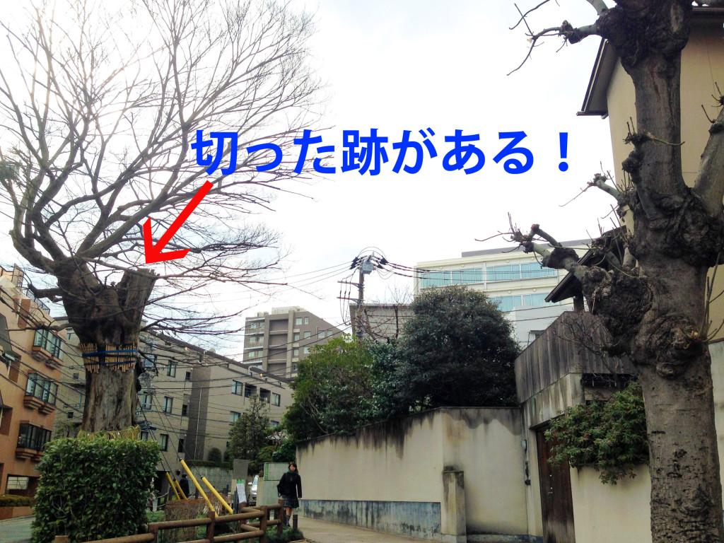 椋の木と幸田露伴邸跡