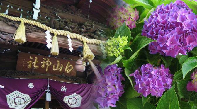 あじさい祭りの白山神社