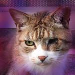 異人坂のあるじ片目の猫