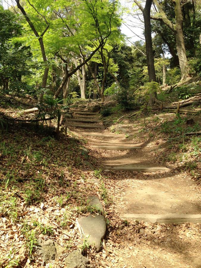 清水谷公園の斜面