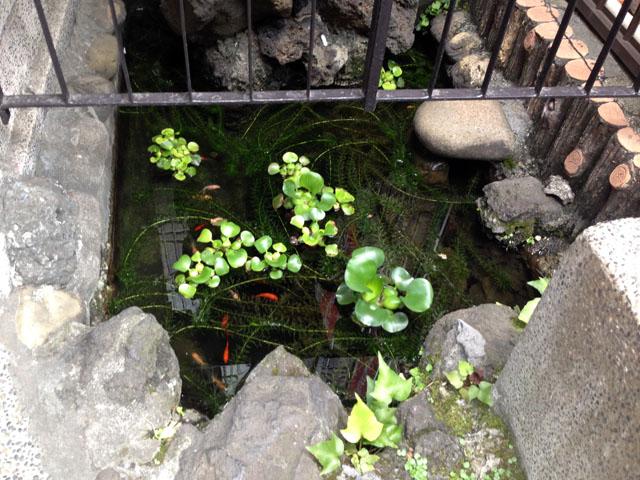 現在のお玉ヶ池