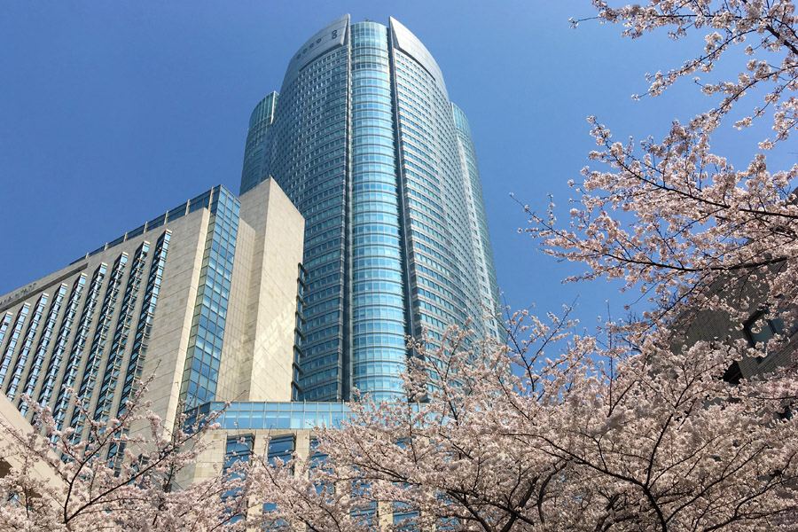 六本木ヒルズと桜