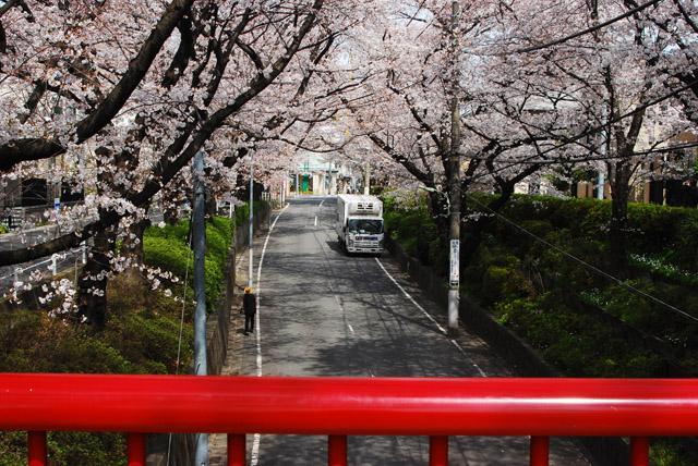 桜橋から坂上を見る。