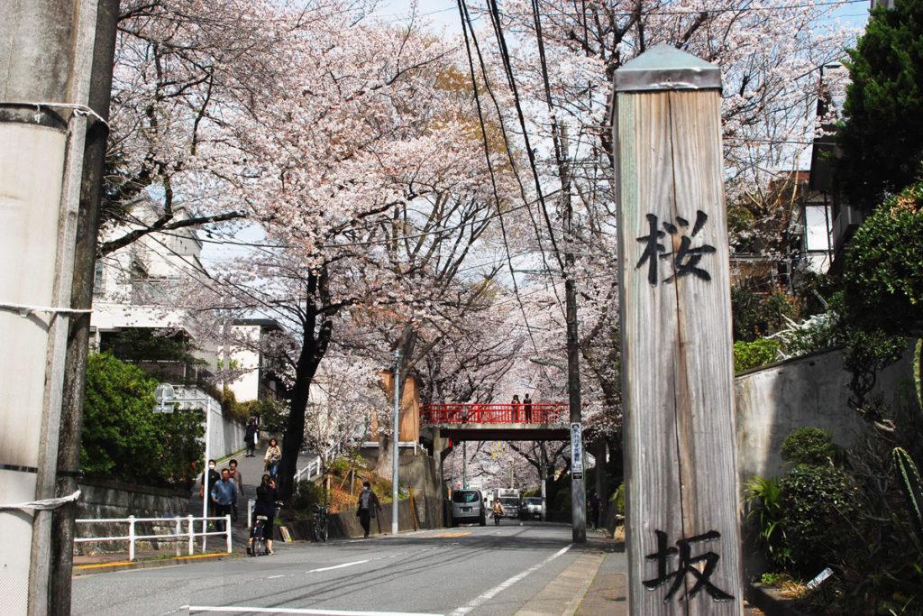 沼部の桜坂