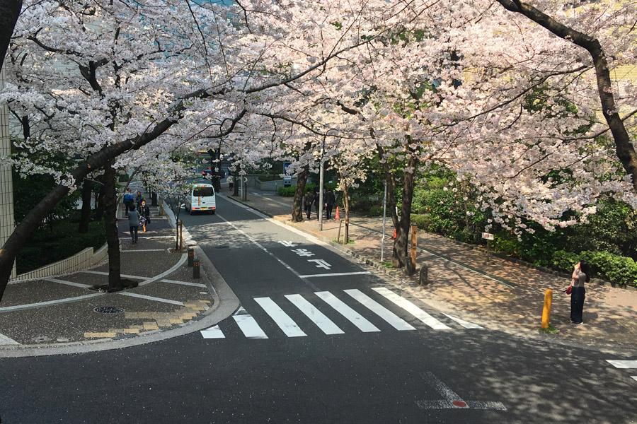 赤坂の桜坂坂上から