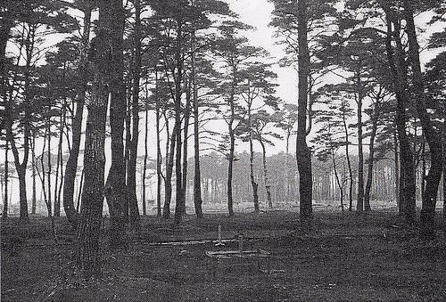 古写真:代々木の雑木林