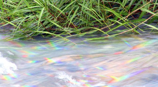 「春の小川」は流れていた