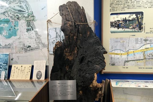初代「縁切り榎」の残存。板橋観光センターにて